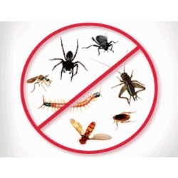 Order General Pest Control