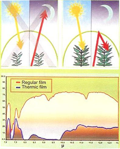 Order Thermic effect