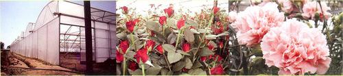Order FVG Germany Flora Agro