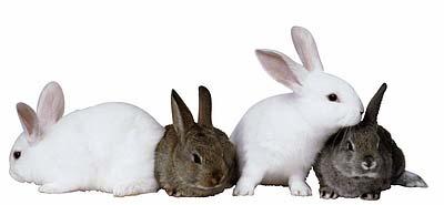 Order Rabbit Farming