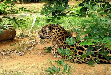 Order Wildlife tours - Temples and tigers