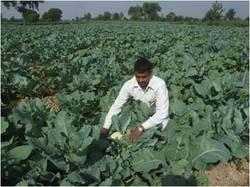 Order Organic Farming