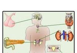 Order Endocrinology
