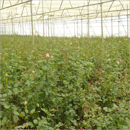 Order Agricultural Projects Services