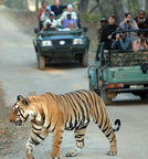 Order Tiger tour in India