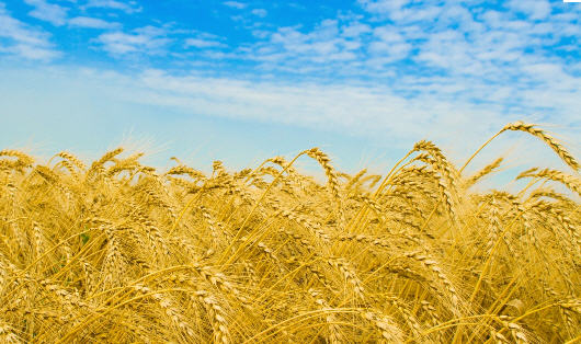 Order Cultivation grain