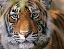 Order Golden Triangle and Tiger tour