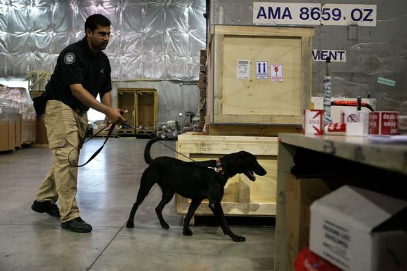 Order Cargo Inspection