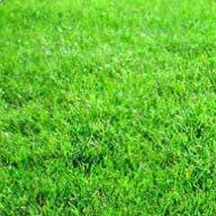 Order Lawn Development