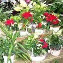 Order Plantation Services