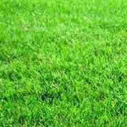 Order Grass Lawn Development Services