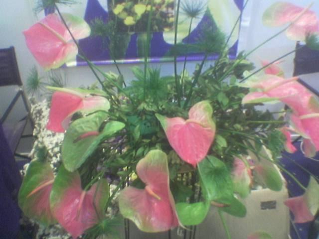 Order Fresh cut flowers, Anthurium