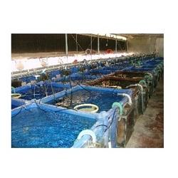 Order Aquaculture Service