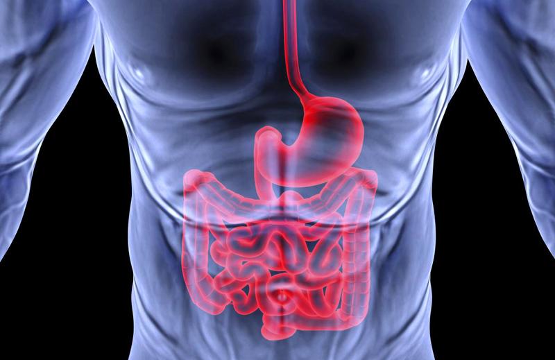 Order Gastroenterology