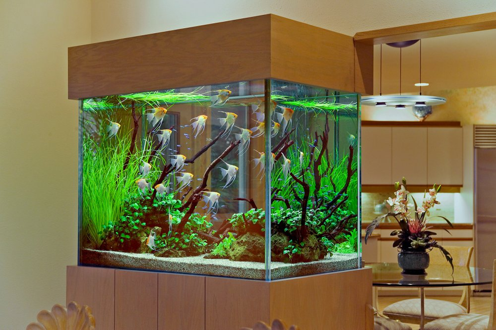 Order Fish tanks