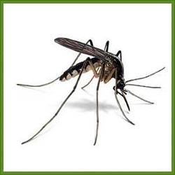 Order Mosquitoes Control
