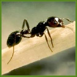Order Ants Control
