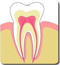 Order Endodontics