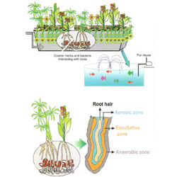 Order Reed Bed System