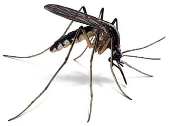 Order Mosquito Disinsectization