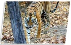 Wildlife Safari tours in India