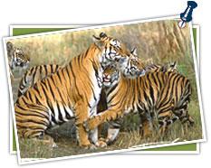 Taj and Tiger tour