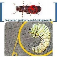 Wood-Borer Treatment
