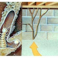 Post-Construction Termite Treatment