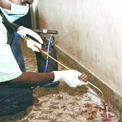 Post Construction Anti Termite Treatment Services