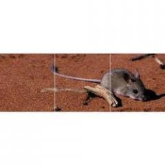 House Rat control