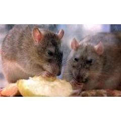 Field Rat Control Services