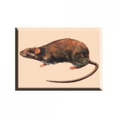 Rodent Management Treatment Services