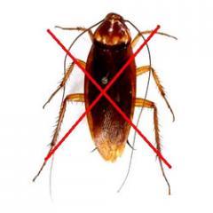 Cockroach Control
