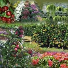 Horticulture Development And Maintenance Services