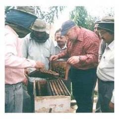 Bee Training Program