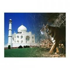 Taj Mahal and Tiger Tours (08 Nights / 09 Days)