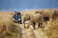 Wildlife Tours Rajasthan