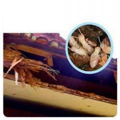 Termite Control Post Construction