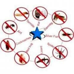 General Pest Control Services