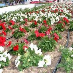 Floriculture Services