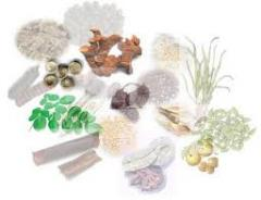 Export Dried Herbs