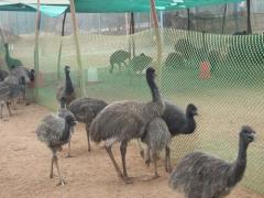 EMU Farms