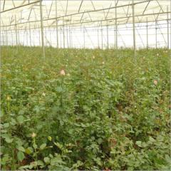 Agricultural Projects Services