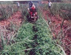 High Yield Technology