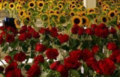 Marketing Cut flower