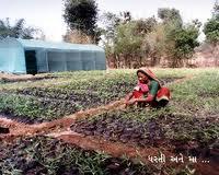 Farm Development