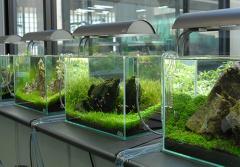 Aquarium  Installation Services