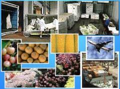 Transportation Of Perishable Goods