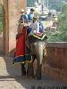 Royal Rajasthan Travel