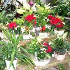 Gardening Plantation Services